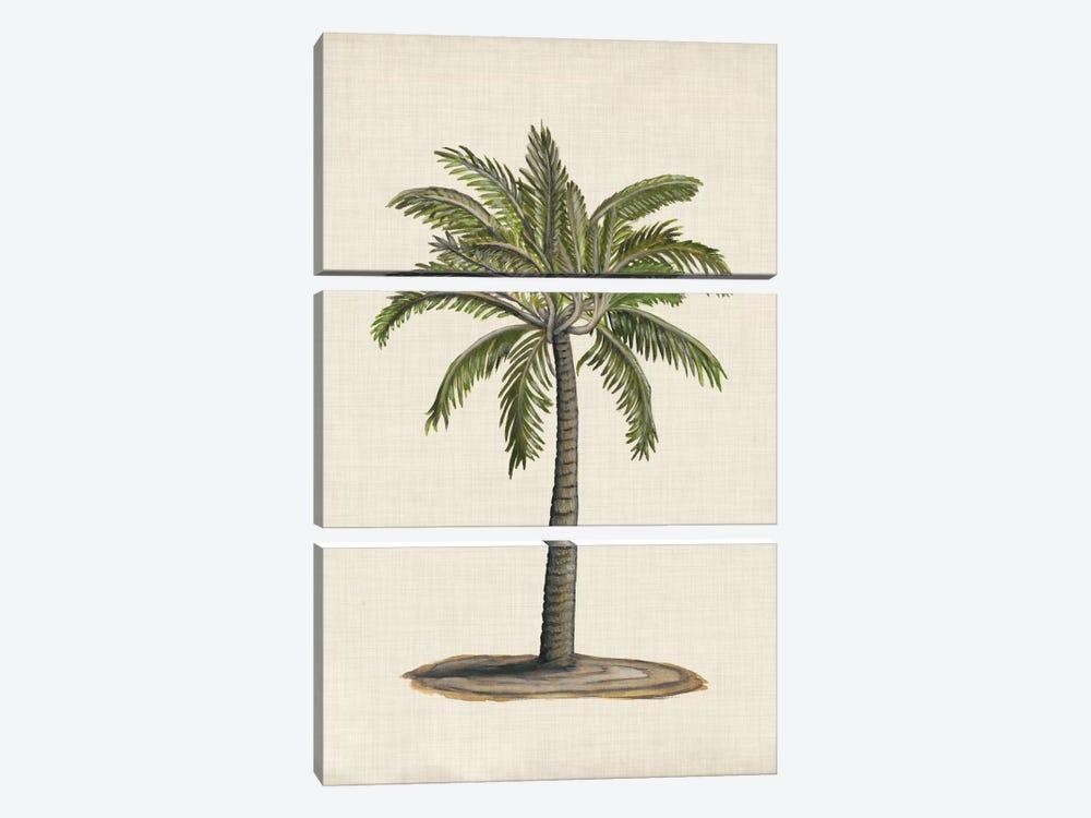 British Palms I by Naomi McCavitt 3-piece Canvas Artwork