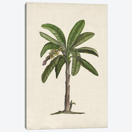 British Palms II Canvas Print #NMC135} by Naomi McCavitt Canvas Print