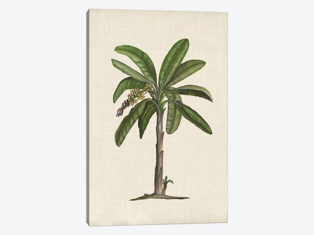 British Palms II by Naomi McCavitt 1-piece Canvas Art Print