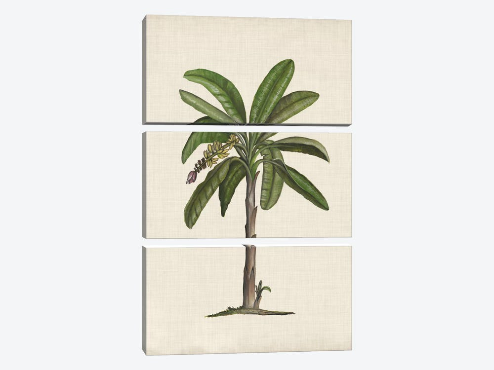 British Palms II by Naomi McCavitt 3-piece Canvas Print
