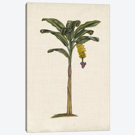British Palms III Canvas Print #NMC136} by Naomi McCavitt Canvas Print