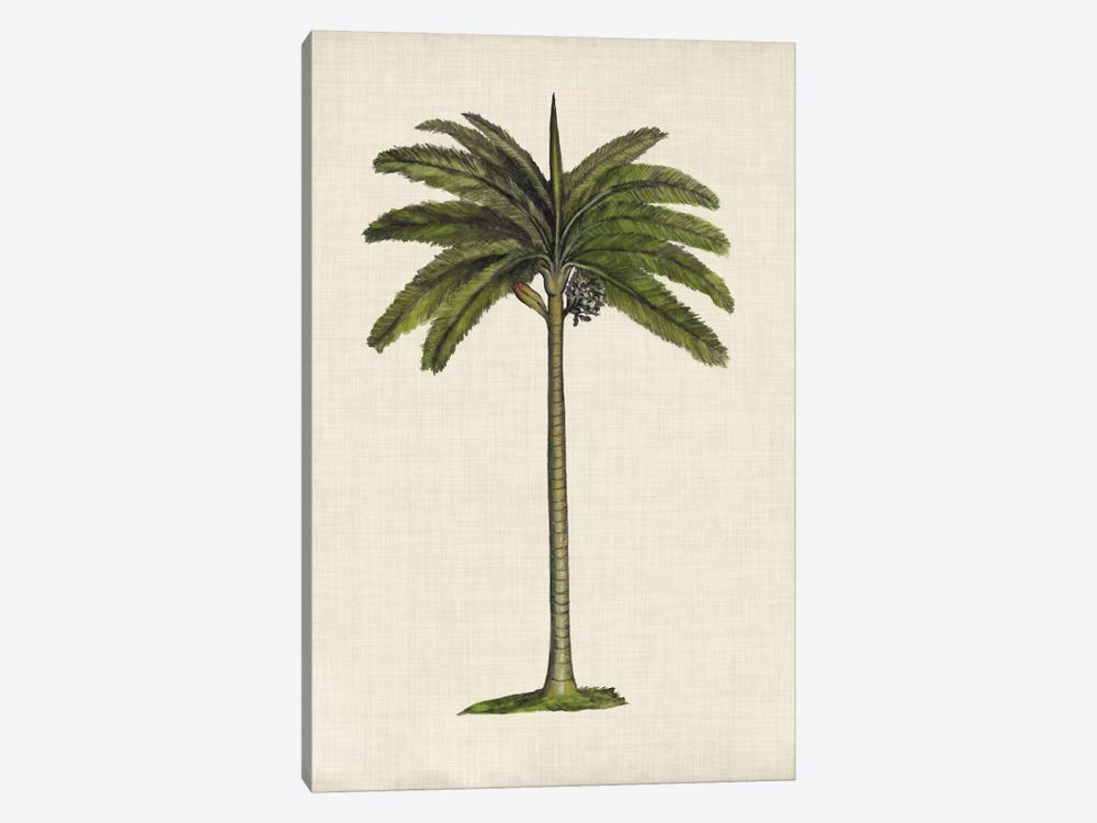 British Palms IV by Naomi McCavitt 1-piece Art Print