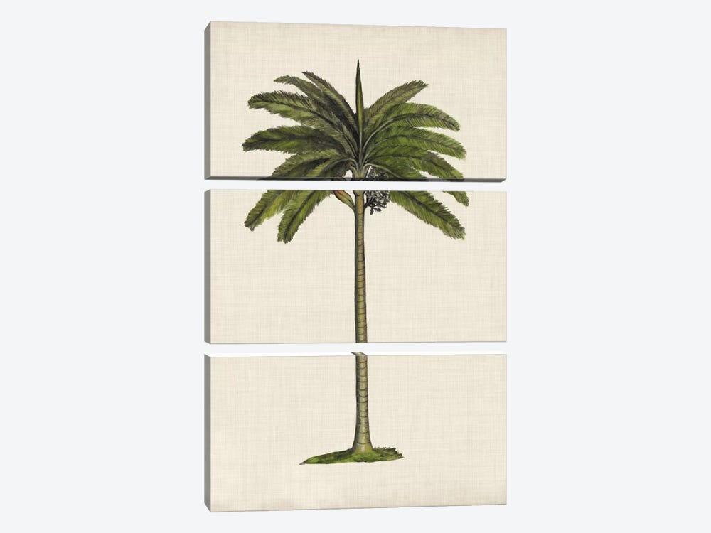 British Palms IV by Naomi McCavitt 3-piece Canvas Art Print