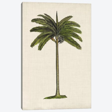 British Palms IV Canvas Print #NMC137} by Naomi McCavitt Canvas Art Print