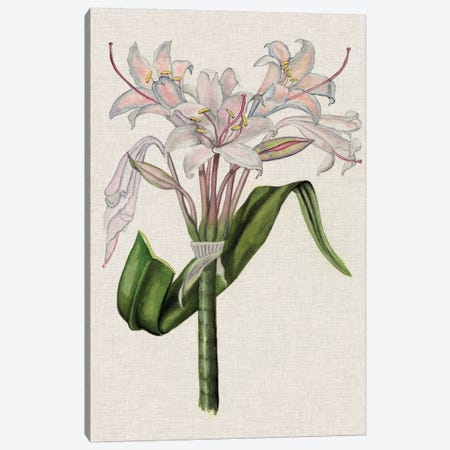 Crinium Lily II Canvas Print #NMC139} by Naomi McCavitt Canvas Wall Art