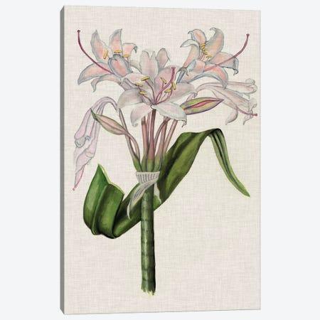 Crinium Lily II Canvas Print #NMC139} by Naomi McCavitt Canvas Wall Art