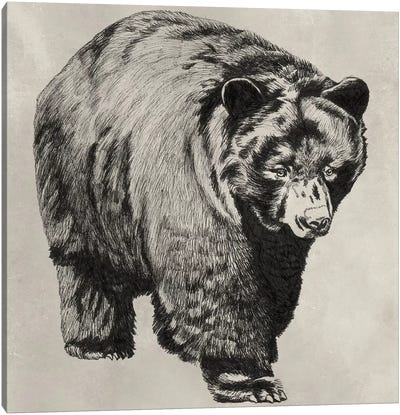 Pen & Ink Bear I Canvas Art Print