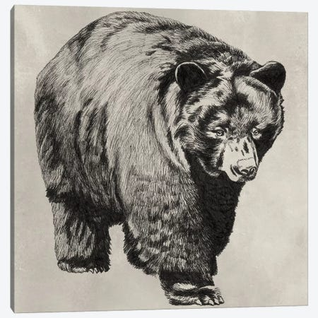Pen & Ink Bear I Canvas Print #NMC165} by Naomi McCavitt Canvas Art