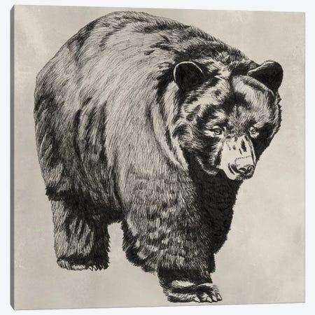Pen & Ink Bear I Canvas Print #NMC165} by Naomi McCavitt Canvas Art
