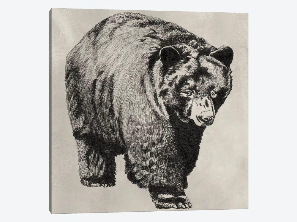 Pen & Ink Bear I by Naomi McCavitt 1-piece Canvas Artwork