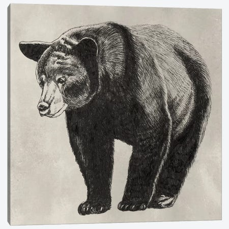 Pen & Ink Bear II Canvas Print #NMC166} by Naomi McCavitt Canvas Wall Art