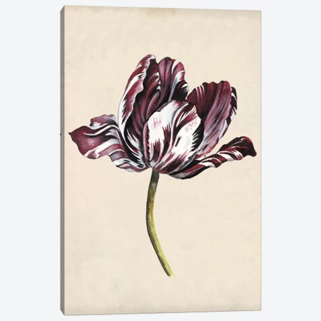 Antique Tulip Study I Canvas Print #NMC168} by Naomi McCavitt Art Print