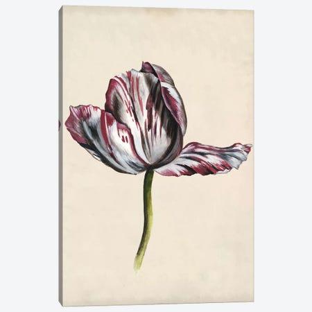 Antique Tulip Study II 3-Piece Canvas #NMC169} by Naomi McCavitt Canvas Print