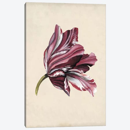 Antique Tulip Study III Canvas Print #NMC170} by Naomi McCavitt Canvas Artwork