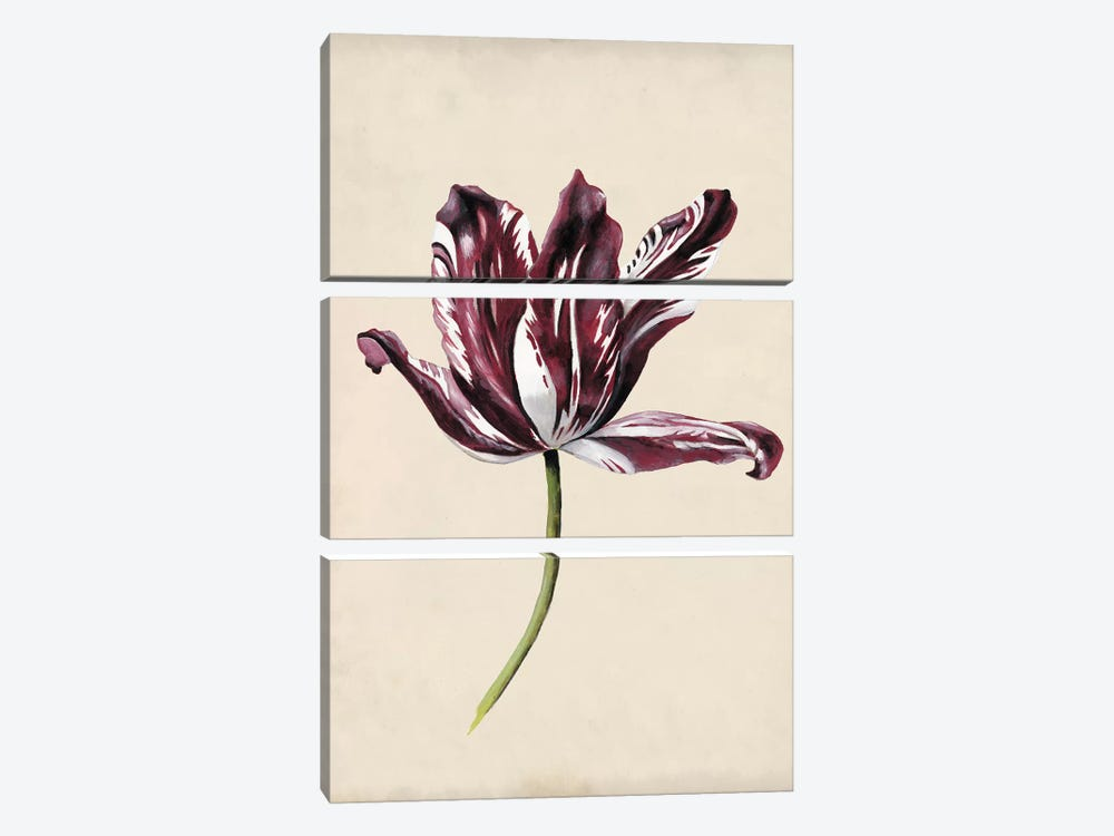 Antique Tulip Study IV 3-piece Canvas Art Print