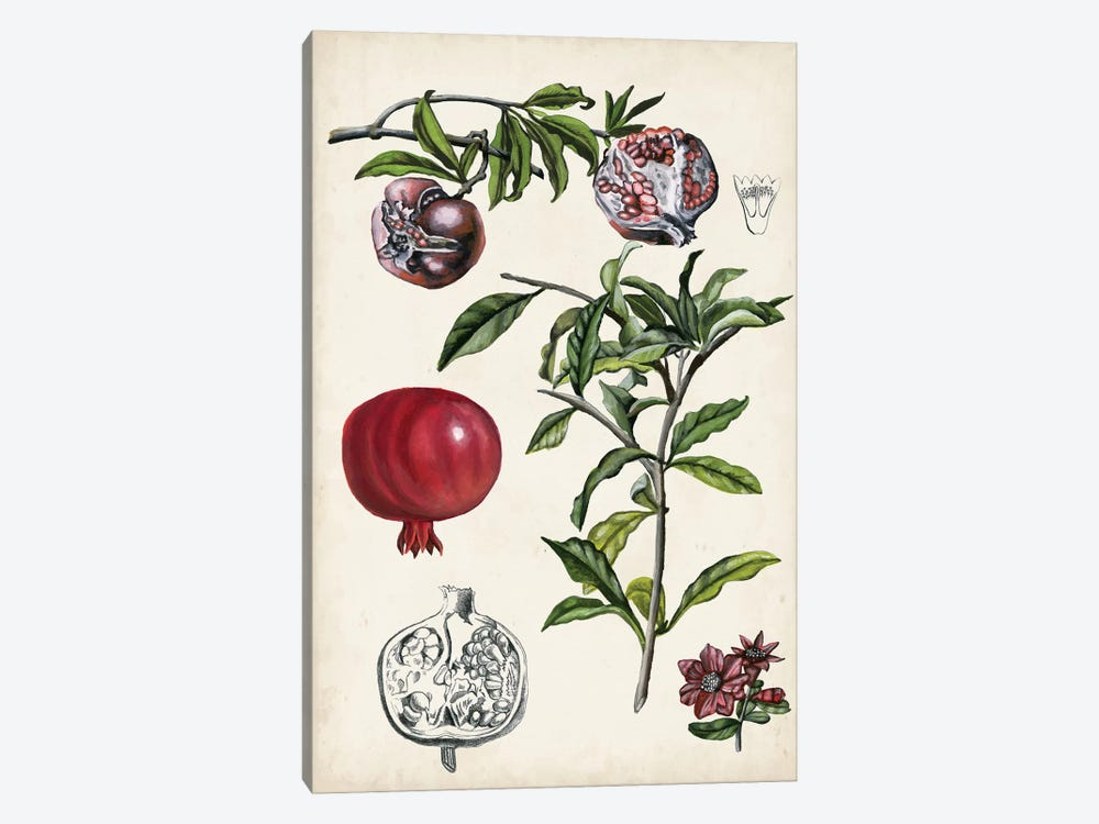 Pomegranate Composition I 1-piece Canvas Wall Art