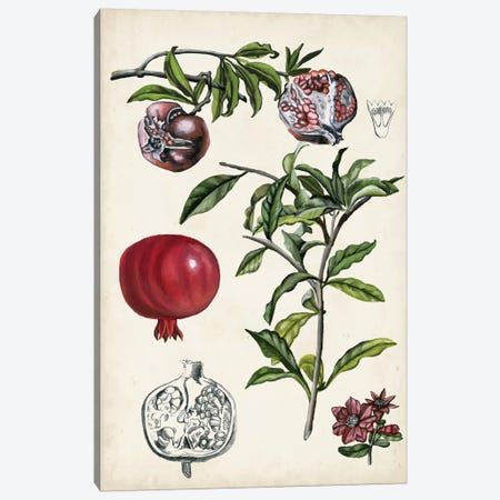 Pomegranate Composition I 3-Piece Canvas #NMC178} by Naomi McCavitt Canvas Art