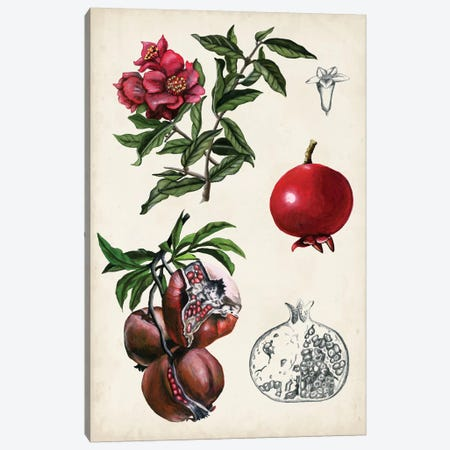 Pomegranate Composition II 3-Piece Canvas #NMC179} by Naomi McCavitt Canvas Art