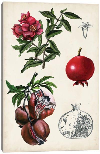 Pomegranate Composition II Canvas Art Print