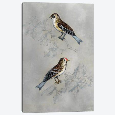 Silvered Aviary II Canvas Print #NMC181} by Naomi McCavitt Canvas Print