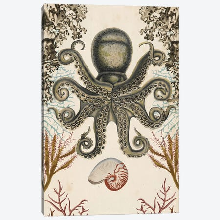 Antiquarian Menagerie: Octopus Canvas Print #NMC184} by Naomi McCavitt Canvas Artwork