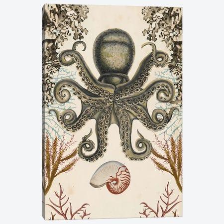 Antiquarian Menagerie: Octopus Canvas Print #NMC184} by Naomi McCavitt Canvas Artwork