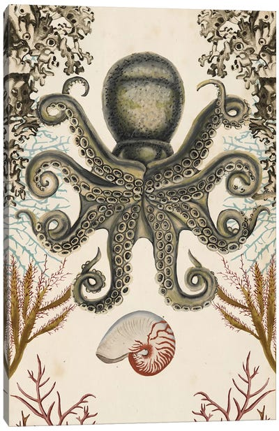 Antiquarian Menagerie: Octopus Canvas Art Print