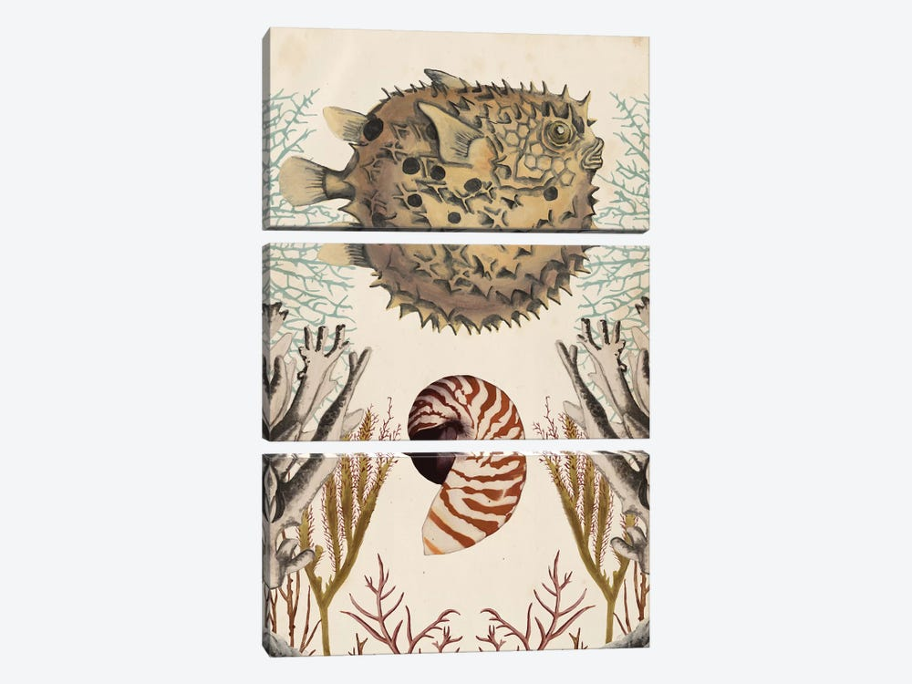 Antiquarian Menagerie: Puffer Fish 3-piece Canvas Wall Art