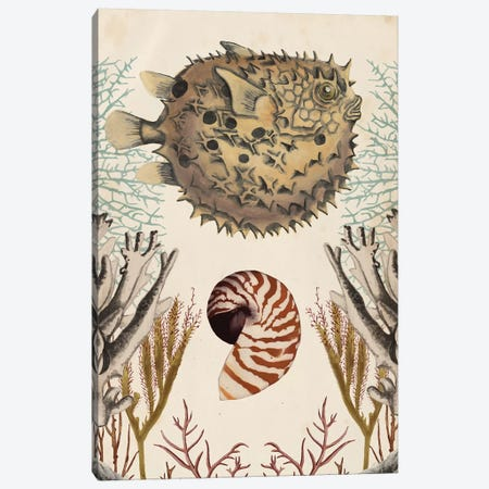 Antiquarian Menagerie: Puffer Fish Canvas Print #NMC185} by Naomi McCavitt Canvas Art