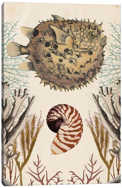 Antiquarian Menagerie: Puffer Fish Canvas Art Print