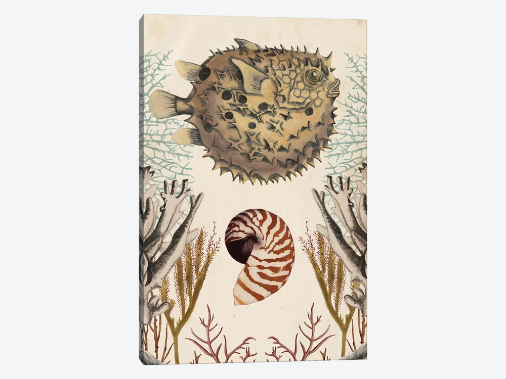 Antiquarian Menagerie: Puffer Fish 1-piece Canvas Wall Art