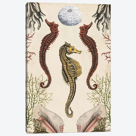 Antiquarian Menagerie: Seahorse Canvas Print #NMC186} by Naomi McCavitt Canvas Wall Art