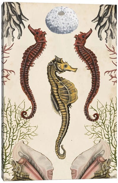 Antiquarian Menagerie: Seahorse Canvas Art Print