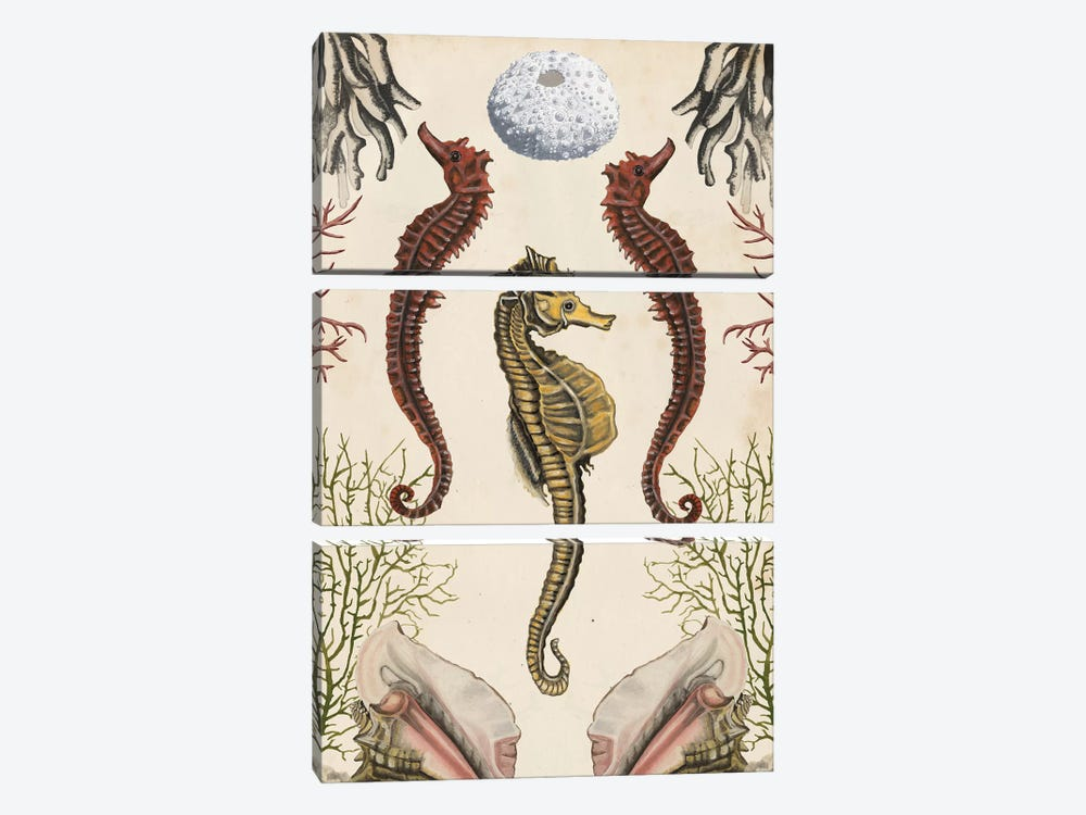 Antiquarian Menagerie: Seahorse by Naomi McCavitt 3-piece Canvas Print