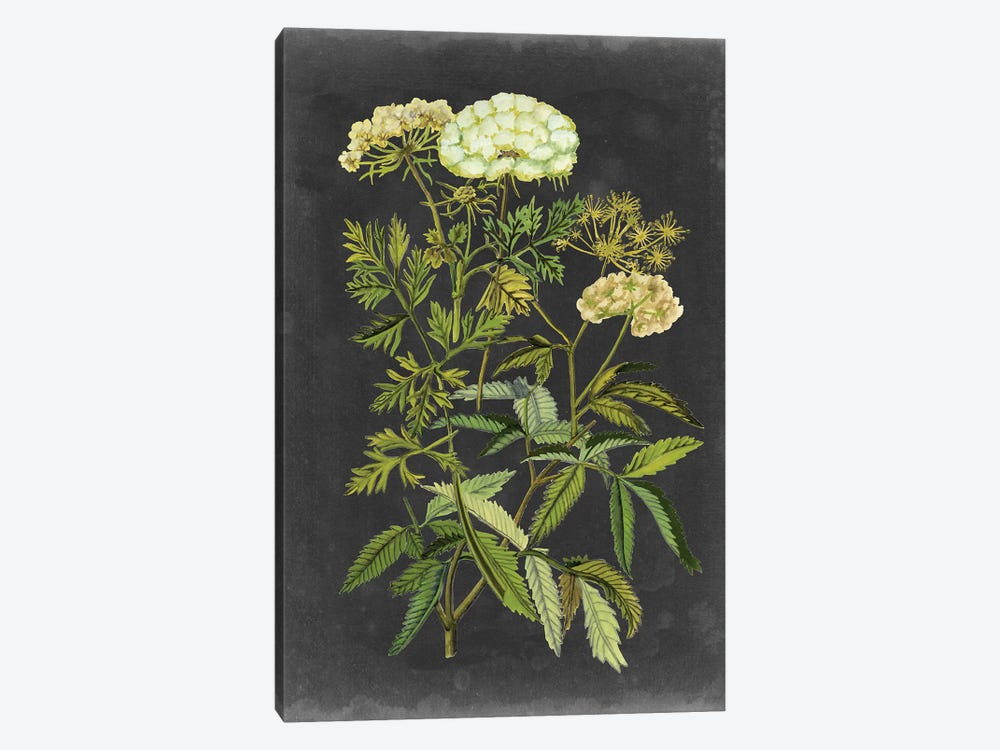 Bookplate Floral I by Naomi McCavitt 1-piece Canvas Wall Art