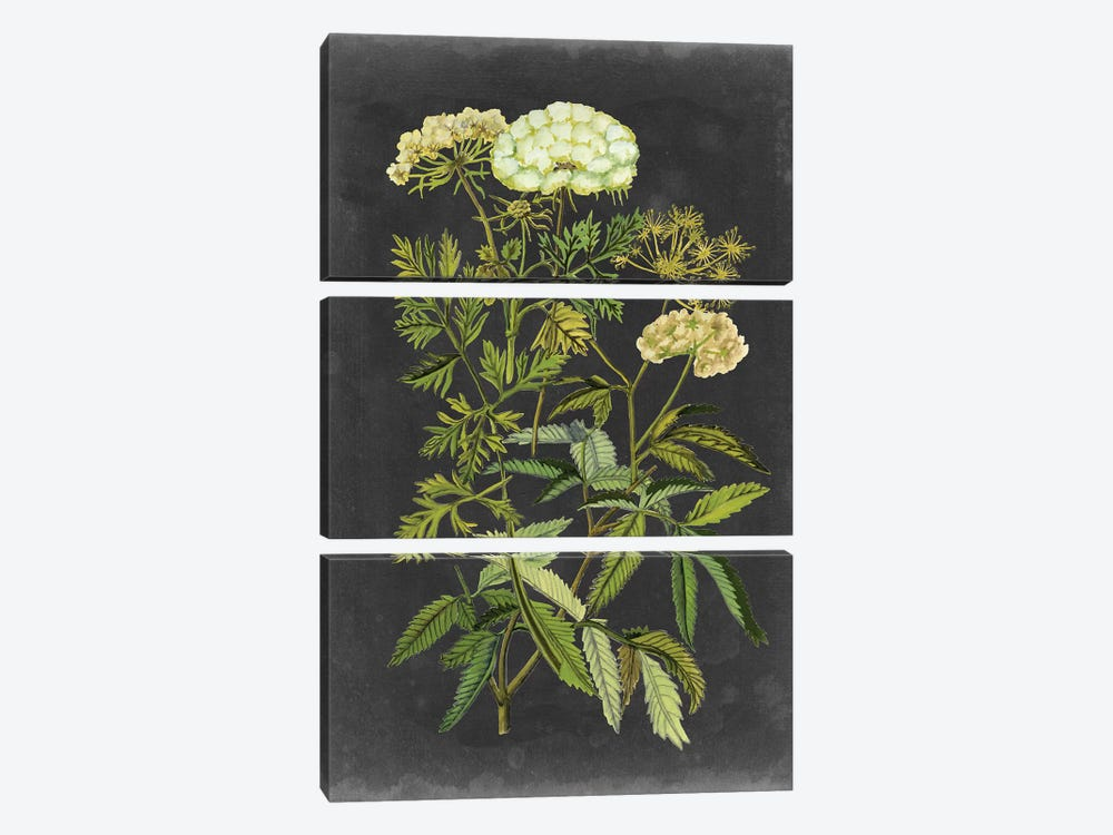Bookplate Floral I by Naomi McCavitt 3-piece Canvas Art