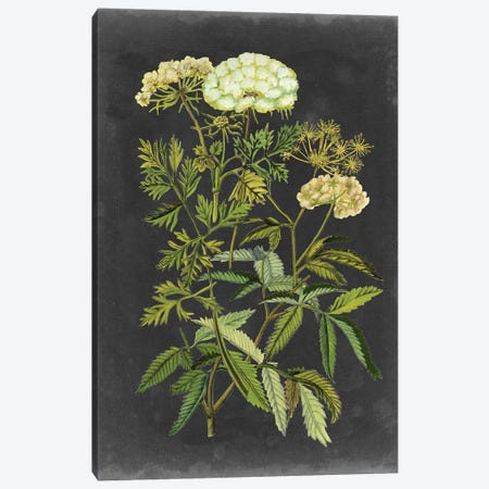 Bookplate Floral I 3-Piece Canvas #NMC189} by Naomi McCavitt Canvas Print