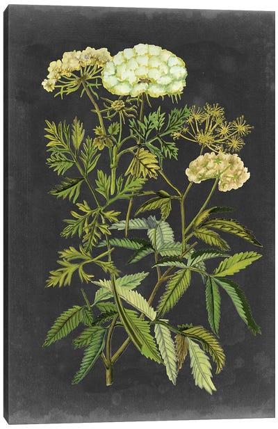 Bookplate Floral I Canvas Art Print