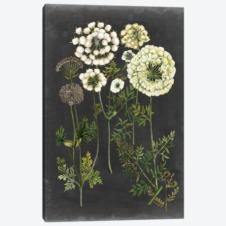 Bookplate Floral II Canvas Print #NMC190} by Naomi McCavitt Canvas Wall Art