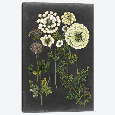 Bookplate Floral II Canvas Print #NMC190} by Naomi McCavitt Canvas Wall Art