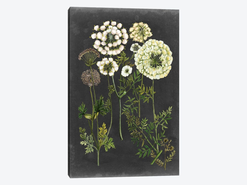 Bookplate Floral II by Naomi McCavitt 1-piece Canvas Wall Art