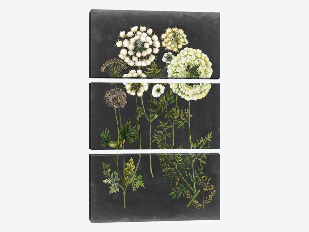Bookplate Floral II by Naomi McCavitt 3-piece Canvas Artwork