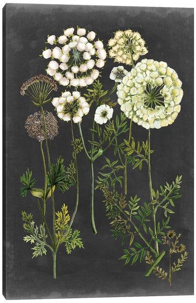 Bookplate Floral II Canvas Art Print
