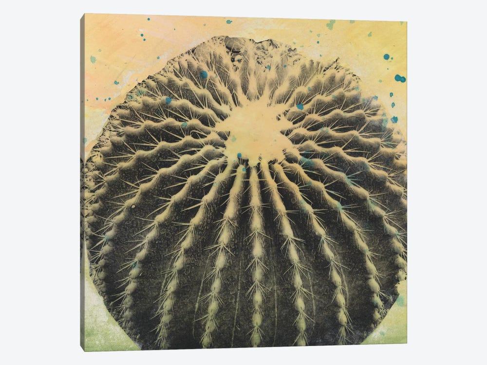 Desert Dreams III by Naomi McCavitt 1-piece Canvas Artwork