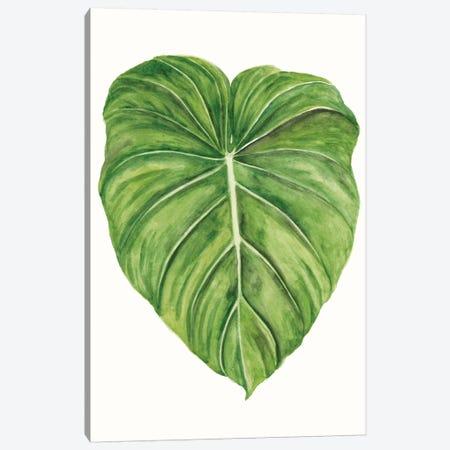 Tropical Breeze Leaves II Canvas Print #NMC208} by Naomi McCavitt Canvas Wall Art