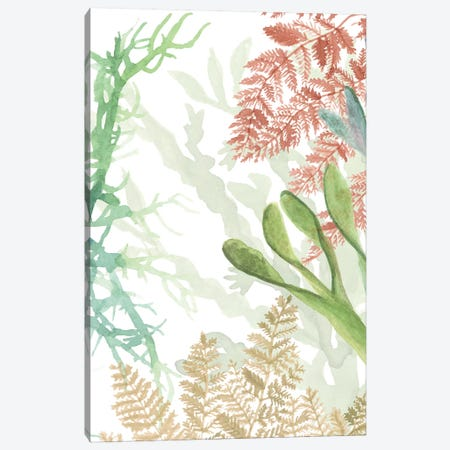 Woven Sea Plants I Canvas Print #NMC211} by Naomi McCavitt Canvas Print