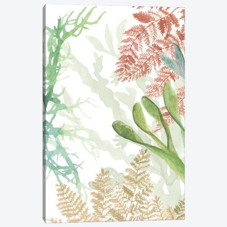 Woven Sea Plants I Canvas Print #NMC211} by Naomi McCavitt Canvas Print