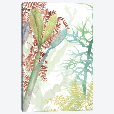 Woven Sea Plants II Canvas Print #NMC212} by Naomi McCavitt Canvas Art Print