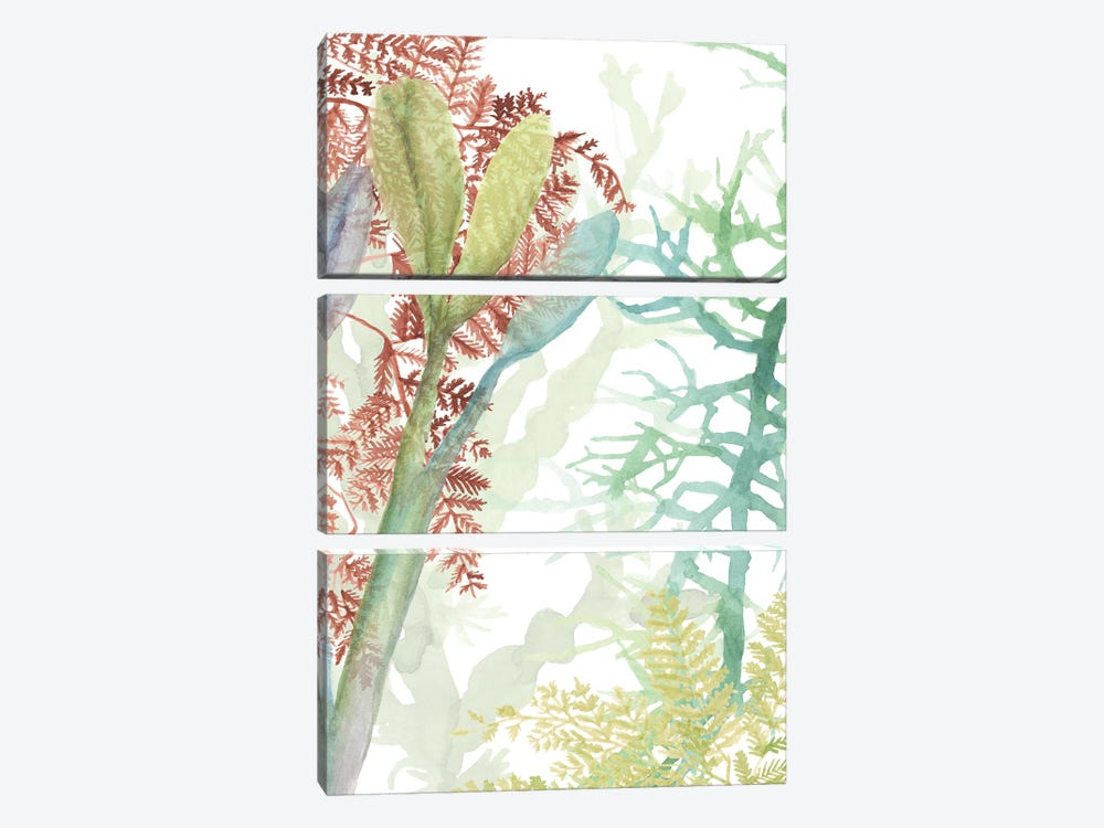 Woven Sea Plants II by Naomi McCavitt 3-piece Canvas Wall Art