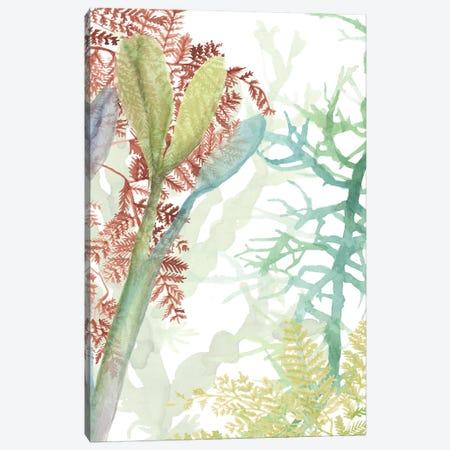 Woven Sea Plants II Canvas Print #NMC212} by Naomi McCavitt Canvas Art Print